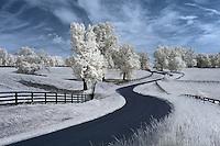 Central Virginia Infrared
