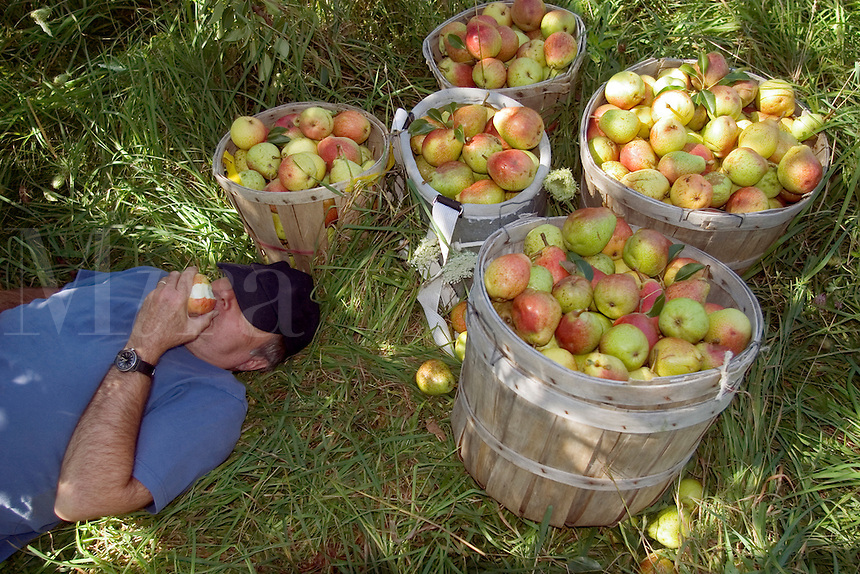 Eating Pears at the Twenty Acre Farm in Grand Isle, VT