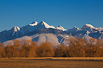 Snow capped Mission Mountains and willow trees in early spring