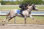 #16Fasig-Tipton Florida Sale,Under Tack Show. Palm Meadows Florida 03-23-2012