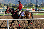 ARCADIA, CA  OCTOBER 26: Breeders' Cup Sprint entrant Matera Sky, trained by Hideyuki Mori, exercises in preparation for the Breeders' Cup World Championships at Santa Anita Park in Arcadia, California on October 26, 2019. (Photo by Casey Phillips/Eclipse Sportswire/CSM)