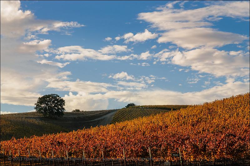 Late Light, Niner Wine Estate, Paso Robles CA
