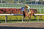 07 February 2010:  Lucas Brady with jockey Cecilio Penalba in the Eighth race The Hallandale Beach Stakes at Gulfstream Park in Hallandale Beach, FL.