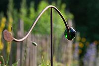 Unser Naturgarten in Hammer, Garten, insektenfreundlicher Garten, vogelfreundlicher Garten, blütenreich, Wildblumen, Wildblumengarten, Gartendeko, Dekoration