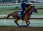 October 31, 2020: Red King, trained by trainer Philip D'Amato, exercises in preparation for the Breeders' Cup Turf at Keeneland Racetrack in Lexington, Kentucky on October 31, 2020. Scott Serio/Eclipse Sportswire/Breeders Cup/CSM