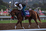 ARCADIA, CA  OCTOBER 25: Breeders' Cup Sprint entrant Landeskog, trained by Doug F. O'Neill, exercises in preparation for the Breeders' Cup World Championships at Santa Anita Park in Arcadia, California on October 25, 2019.  (Photo by Casey Phillips/Eclipse Sportswire/CSM)
