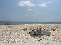 SEA_LOCATION_80371