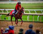 October 30, 2020: Pingxiang, trained by trainer Hideyuki Mori, exercises in preparation for the Breeders' Cup Sprint at Keeneland Racetrack in Lexington, Kentucky on October 30, 2020. Alex Evers/Eclipse Sportswire/Breeders Cup