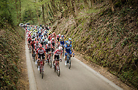 Team Lotto-Soudal in front up the Hagaard climb<br /> <br /> 59th De Brabantse Pijl - La Flèche Brabançonne 2019 (1.HC)<br /> One day race from Leuven to Overijse (BEL/196km)<br /> <br /> ©kramon