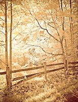 Old wood fence in hardwood forest, backlit