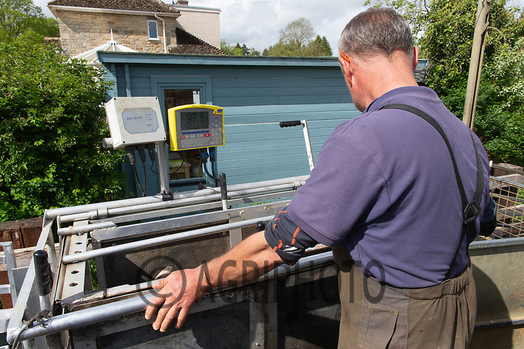 24-5-2021 Shepherd weighing lambs <br /> ©Tim Scrivener Photographer 07850 303986<br />      ....Covering Agriculture In The UK....
