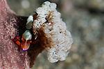 Bima, Sumbawa, Nusa Tenggara, Indonesia, Pacific Ocean