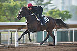 SHA TIN,HONG KONG-DECEMBER 09 : Roly Poly,trained by Aidan O'Brien,exercises in preparation for the Hong Kong Mile at Sha Tin Racecourse on December 9,2017 in Sha Tin,New Territories,Hong Kong (Photo by Kaz Ishida/Eclipse Sportswire/Getty Images)