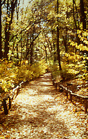 Available from Jeff as a Fine Art Print<br /> <br /> Available for commercial and editorial licensing from Getty Images.  Please go to www.gettyimages.com and search for image # 10149882.<br /> <br /> Forest Path in Autumn, New York Botanical Garden, Bronx, New York City, New York State, USA