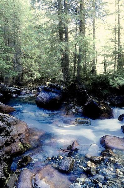 Dancing Water, Avalanche Creek, Glacier National Park