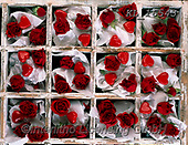 Interlitho-Alberto, FLOWERS, BLUMEN, FLORES, photos+++++,roses red,KL16543,#f#, EVERYDAY ,rose,roses,valentine
