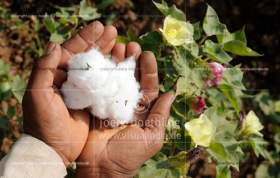 INDIA, Madhya Pradesh, Khargone , farmer of cooperative Shiv Krishi Utthan Sanstha harvest fair trade organic cotton / INDIEN, Madhya Pradesh, Khargone, farmer der Kooperative Shiv Krishi Utthan Sanstha ernten fairtrade Biobaumwolle