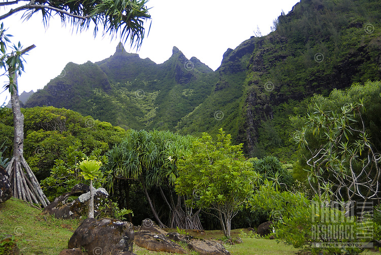 Gorgeous lush green grounds and mountains create an idyllic tropical paradise at Limahuli Gardens, on Kauai's majestic north shore. One of the 5 National Tropical Botanical gardens in the US.