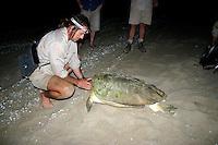 Sea Turtle Researcher Ian Bell at Flinder's Beach, Mapoon, Cape York Peninsula