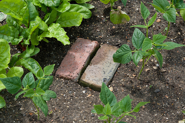 A couple of housebricks make a simple stepping stone to stand on when watering, weeding and harvesting - thus avoiding the soil becoming compacted.