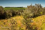 Image Ref: CA957<br /> Location: Bushrangers Bay Track<br /> Date of Shot: 26.09.19