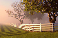 Fenced pasture with fog and sunrise and hawk in tree. Near Wilsonville. Oregon