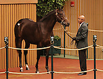 Hip #231 Malibu Moon - Rebridled Dreams filly sold for $550,000 at the Keeneland September Yearling Sale.  September 11, 2012.