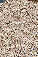 Cajanus cajan aka Cajanus indicus (Pigeon pea, Pigeonpea) seeds Tropical plant