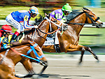HALLANDALE BEACH, FL - JAN 28: Post-time favorite Stanford #4, ridden by John Velazquez, fights for position early in the Poseidon handicap during the Pegasus World Cup Invitational Day at Gulfstream Park Race Course on January 28, 2017 in Hallandale Beach, Florida. (Photo by Scott Serio/Eclipse Sportswire/Getty Images)