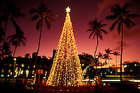 Christmas tree at twilight at Honolulu Hale with pink sky and palm trees