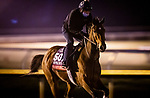 October 31, 2020: Frank'S Rockette, trained by trainer William I. Mott, exercises in preparation for the Breeders' Cup Sprint at Keeneland Racetrack in Lexington, Kentucky on October 31, 2020. Alex Evers/Eclipse Sportswire/Breeders Cup
