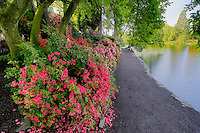 Path with bloominmg rhododendrons and path at Crystal Gardens. Portland. Oregon
