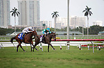 January 02, 2016: Cali Cat (3) with a determined effort to win over Wonderful Remark (10) ina  maiden 3 year old race. Scenes from. Gulfstream Park, Hallandale Beach (FL). Arron Haggart/ESW/CSM