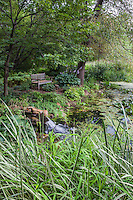 Bench in shady woodland overlooking Minnesota pond and bog garden