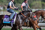 OCT 26 2014:Papacoolpapacoolu, trained by Jeff Mullins, exercises in preparation for the Breeders' Cup Juvenile Turf at Santa Anita Race Course in Arcadia, California on October 26, 2014. Kazushi Ishida/ESW/CSM