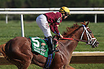July 18, 2015: Sheer Drama, Joe Bravo up, wins the Grade I Delaware Handicap, one and 1/4 miles for fillies and mares 3 and upward at Delaware Park in Stanton DE.  Trainer is David Fawkes, owner is Harold L. Queen. Joan Fairman Kanes/ESW/CSM