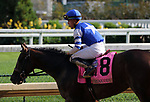 September 14, 2019 : Dennis' Moment (#8, Irad Ortiz Jr.) wins the Iroquois Stakes at Churchill Downs, Louisville, Kentucky. Trainer Dale Romans.  Mary M. Meek/ESW/CSM