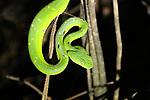 Costa Rica 2019 wildlife