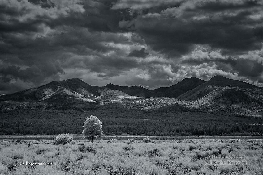 Lone Ponderosa with San Francisco Mountains, Arizona