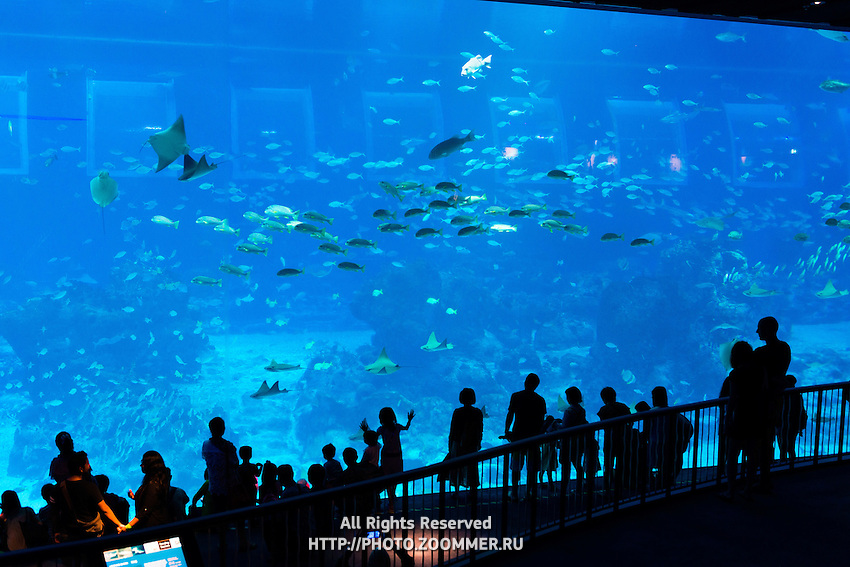 Panoramic marine viewing panel at the SEA Aquarium, Sentosa, Singapore