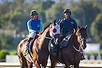 """September 26, 2015: Imperative in the post parade for the Breeders' Cup """"Win and You're In"""" Awesome Again Stakes at Santa Anita Park in Arcadia, California. Zoe Metz/ESW/CSM"""