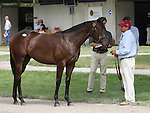 13 July 2010.  Hip #209 Speightstown - Enjoy the Moment colt.