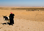 A bedouin shepherd watches his flock in the high desert near Petra, Jordan.  © Rick Collier