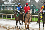 February 28, 2021: Abrogate #5 , ridden by Ricardo Santana, Jr. in the Dixie Belle Stakes for trainer Steven M. Asmussen at Oaklawn Park in Hot Springs,  Arkansas.  Ted McClenning/Eclipse Sportswire/CSM