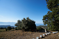 Apiary in Corsica: Near Cargèse, view of an apiary belonging to Mattei Jean-Nicolas, a beekeeper in Corsica not far from the sea. <br /> Près de Cargèse, vue d'un rucher de Mattei Jean-Nicolas, apiculteur en Corse à proximité de la mer.