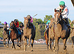 Palace (no. 6), ridden by Cornelio Velasquez and trained by Linda Rice, wins the 35th running of the grade 1 Forego Stakes for three year olds and upward on August 30, 2014 at Saratoga Race Course in Saratoga Springs, New York.  (Bob Mayberger/Eclipse Sportswire)