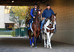 October 22, 2015: Grand Arch, trained by Brian Lynch, and owned by Jim and Susan Hill, is entered in the Breeder's Cup Mile.  Candice Chavez/ESW/CSM