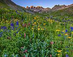 San Juan Mountains, CO<br /> American Basin with delphinium (Delphinium barbeyi), paintbrush (Castilleja rhexifolia), sneezeweed (Dugaldia hoopesii) bluebells (Mertensia ciliata) and other wildflowers in meadows beneath Handies Peak at sunrise
