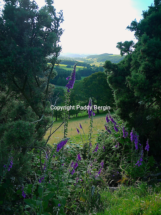 A view through Gorse bushes across the lovely landscape of the Trawscoed Estate, Llanafan, Ceredigion, West Wales.<br /> <br /> Stock Photo by Paddy Bergin