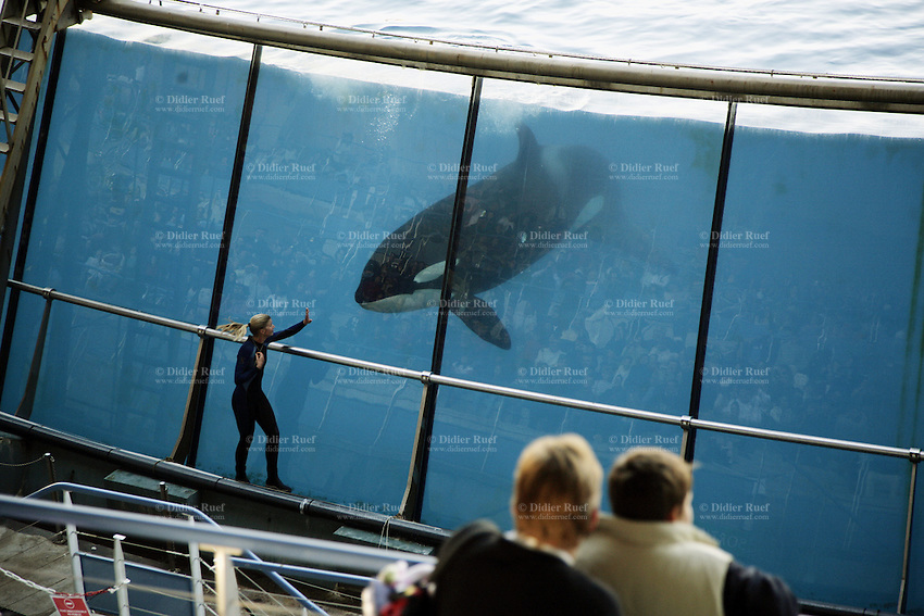 France. Alpes-Maritimes province.  Antibes. Marineland.  Killer whales show. The largest tank in the world performing in 42,000 m3 of sea water, with a panoramic glass wall of 64 metres long. The killer whale (Orcinus orca), commonly referred to as the orca whale or orca, and less commonly as the blackfish, is a toothed whale belonging to the oceanic dolphin family. Killer whales are regarded as apex predators, lacking natural predators. Marineland is an animal exhibition park and receives more than a million visitors per year. 03.11.06 © 2006 Didier Ruef